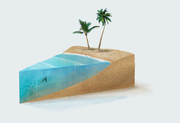 … and two palm trees in a gift