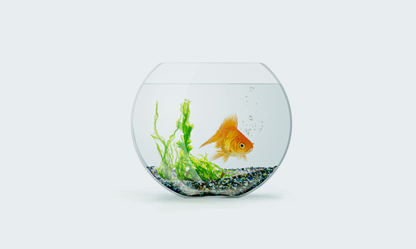 do you need a small fishes in aquariums?